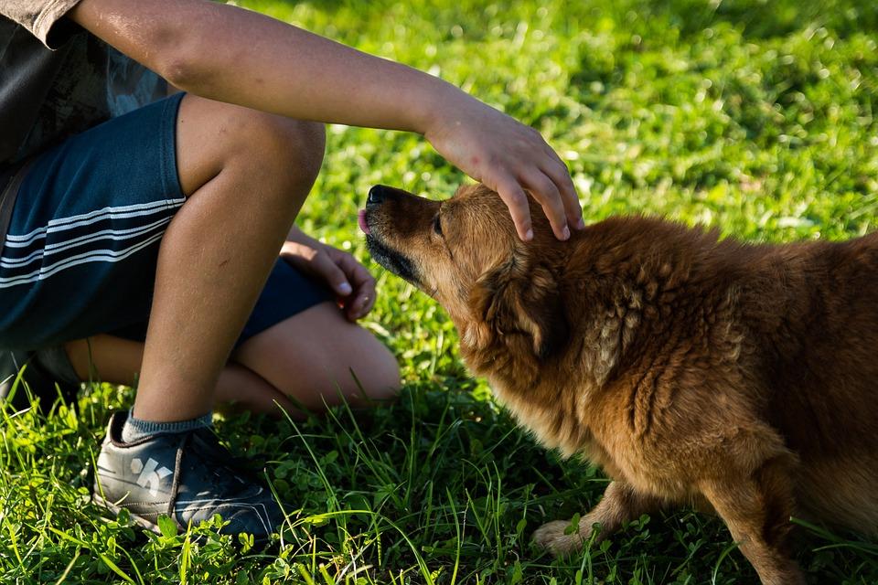 Ребёнок хочет собаку, что делать